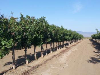 184-pistachios
